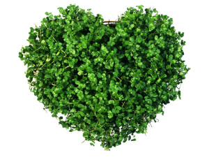 Holidays_Saint_Valentines_Day_Heart_of_the_greens_013163_29